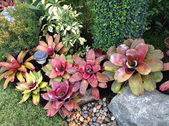 skalní květiny