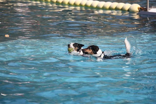 psi v bazénu